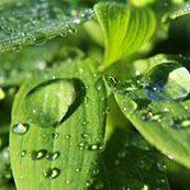 imagen-medioambiente-azcatec-mini